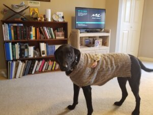 Home Care Services Roswell GA - Dogs Bring Happiness to a Client